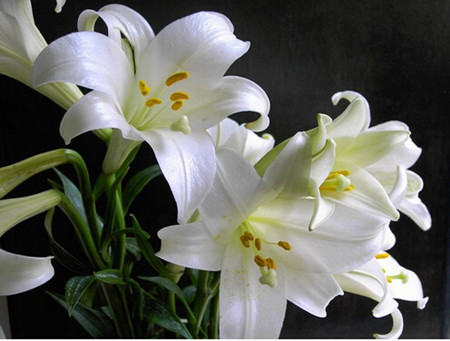 spring maintenance of lilies