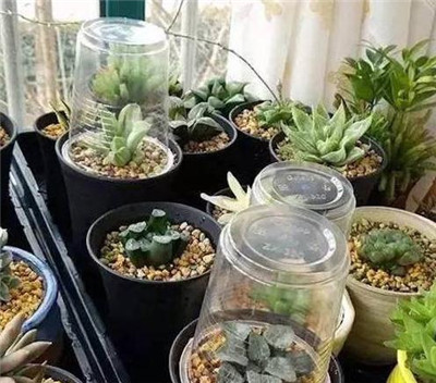 Can succulent plants be smothered?