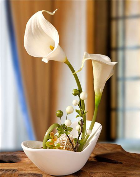 How can the calla Lily bloom more?