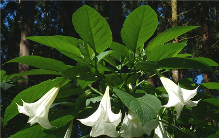 Datura Home Feng Shui Placement